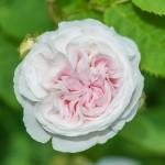 rosengarten-roemerswil-prisc-taylor-10